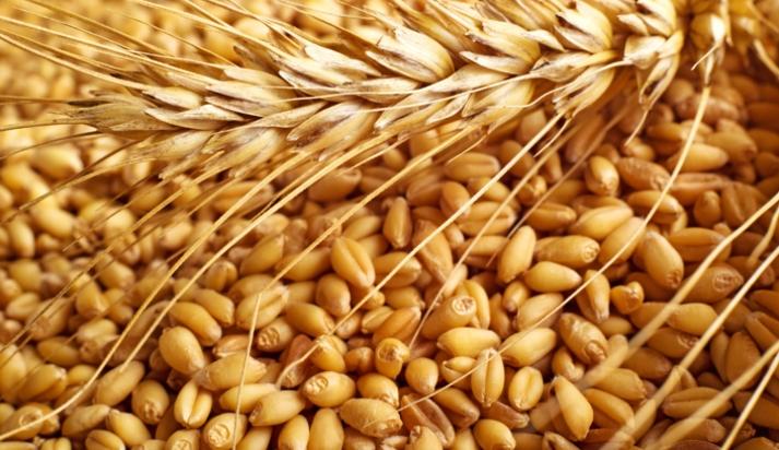 Risultati immagini per grano in chicchi vendita
